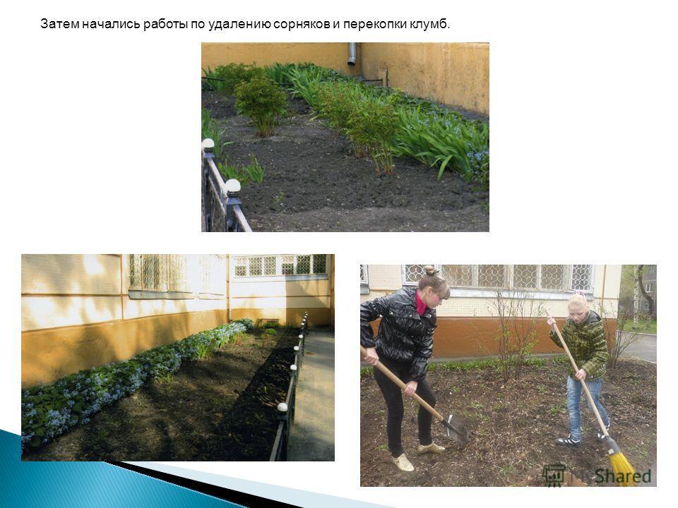 Затем начались работы по удалению сорняков и перекопки клумб.