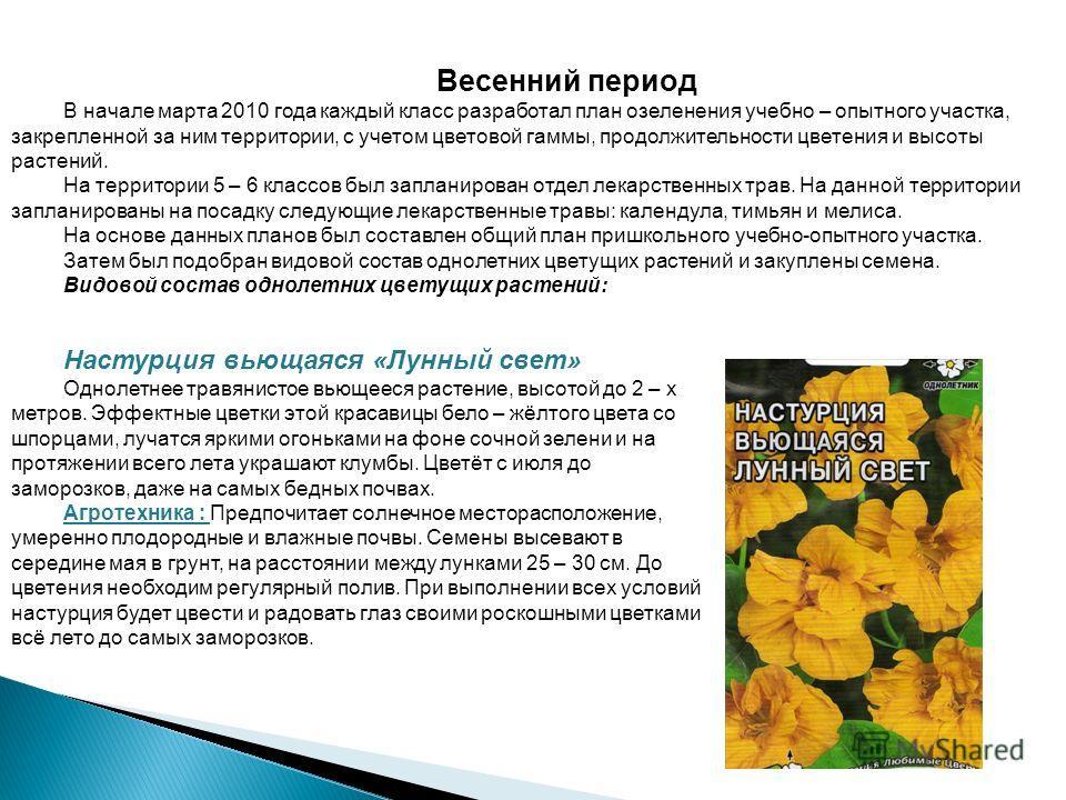 Весенний период В начале марта 2010 года каждый класс разработал план озеленения учебно – опытного участка, закрепленной за ним территории, с учетом цветовой гаммы, продолжительности цветения и высоты растений. На территории 5 – 6 классов был заплани