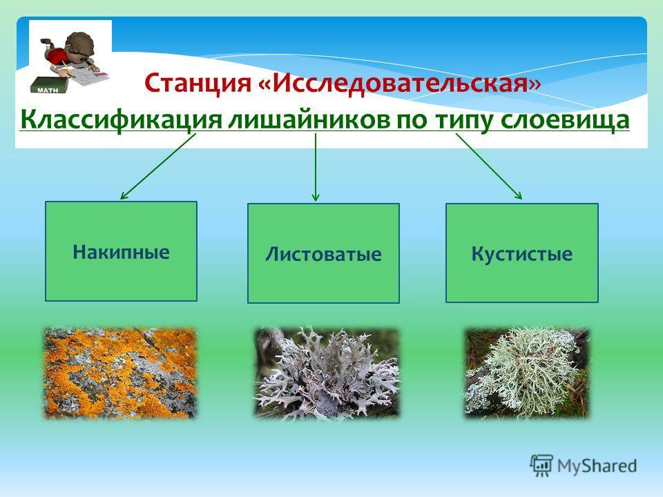 Классификация лишайников по типу слоевища Накипные Кустистые Листоватые Станция «Исследовательская»