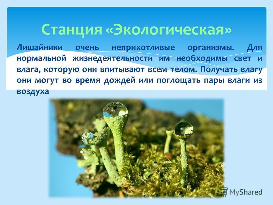 Станция «Экологическая» Лишайники очень неприхотливые организмы. Для нормальной жизнедеятельности им необходимы свет и влага, которую они впитывают всем телом. Получать влагу они могут во время дождей или поглощать пары влаги из воздуха