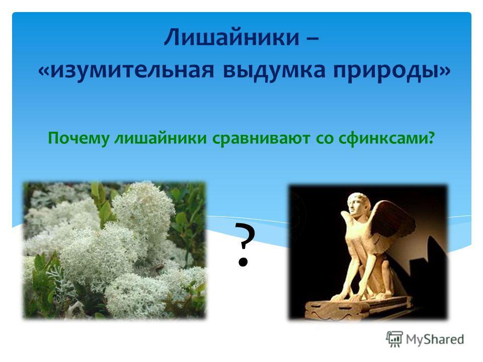 Лишайники – «изумительная выдумка природы» Почему лишайники сравнивают со сфинксами? ?