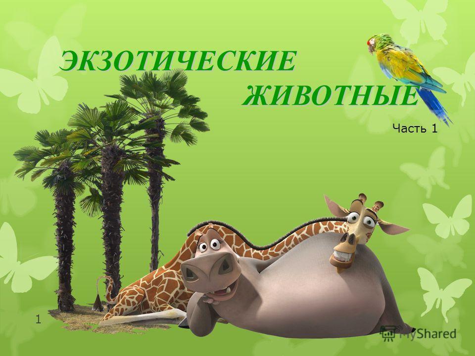 http://moidomi-ki.ru/ 1 ЭКЗОТИЧЕСКИЕЖИВОТНЫЕ Часть 1