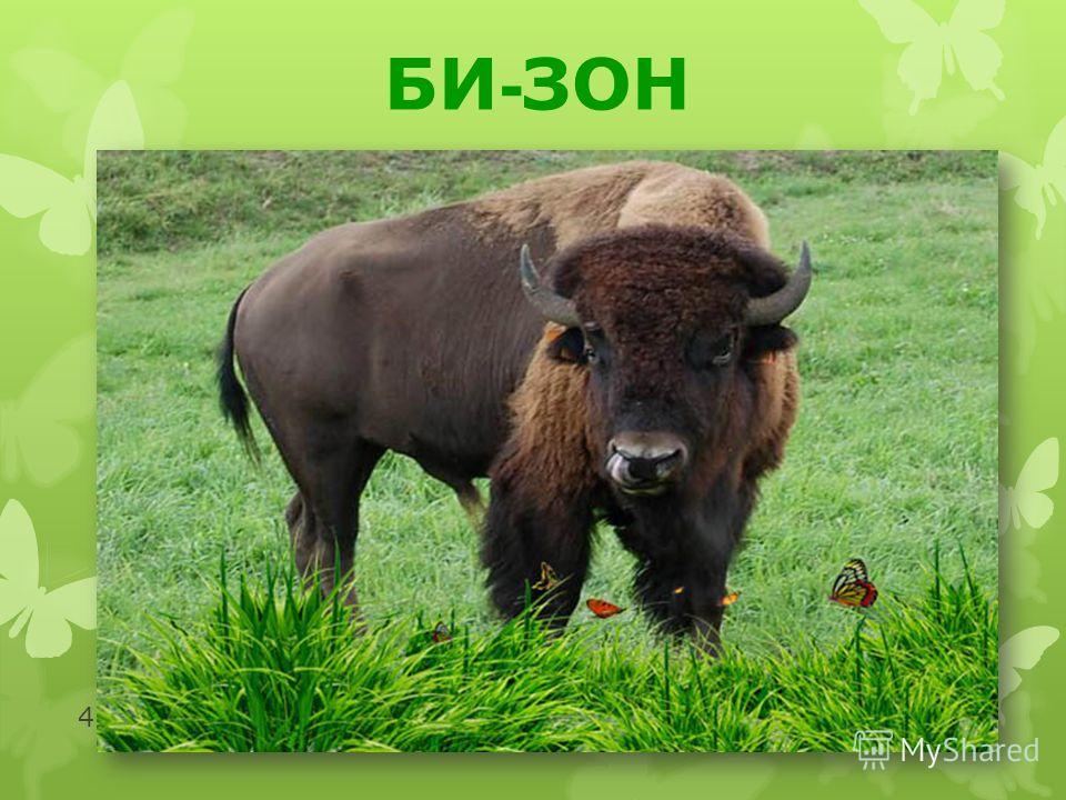 http://moidomi-ki.ru/ 4 БИ - ЗОН