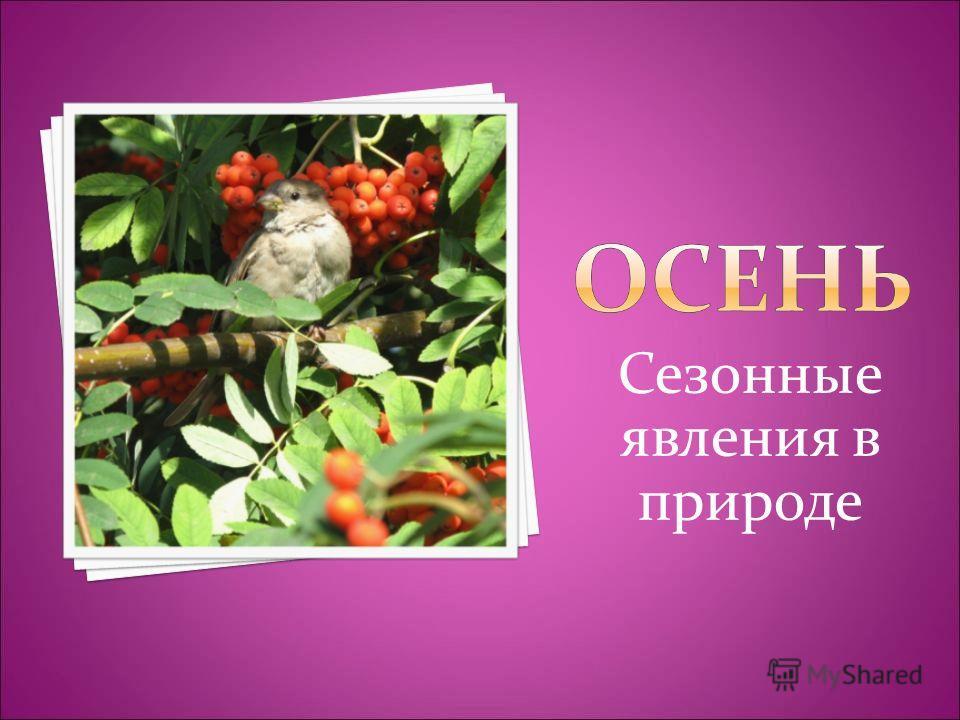Сезонные явления в природе