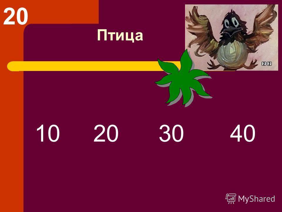 Птица 10 20 30 40 20