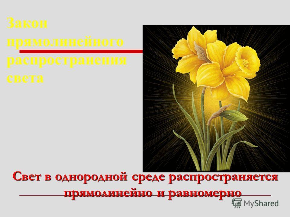 Свет в однородной среде распространяется прямолинейно и равномерно Закон прямолинейного распространения света