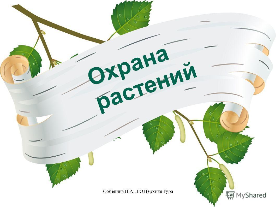 Охрана растений Собенина Н.А., ГО Верхняя Тура