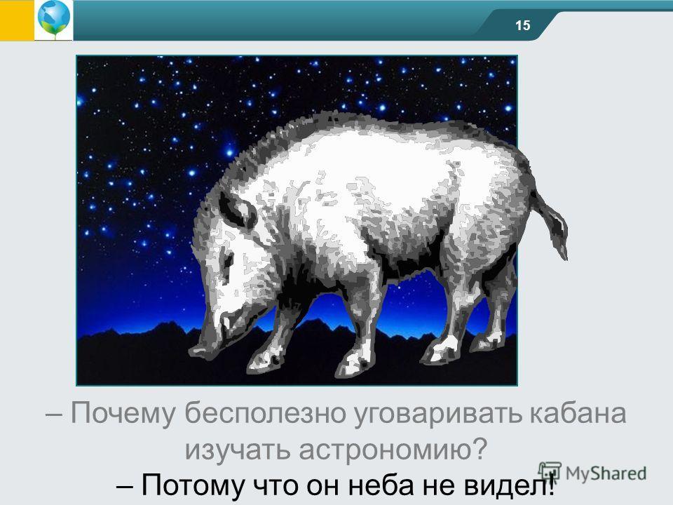 15 – Почему бесполезно уговаривать кабана изучать астрономию? – Потому что он неба не видел!