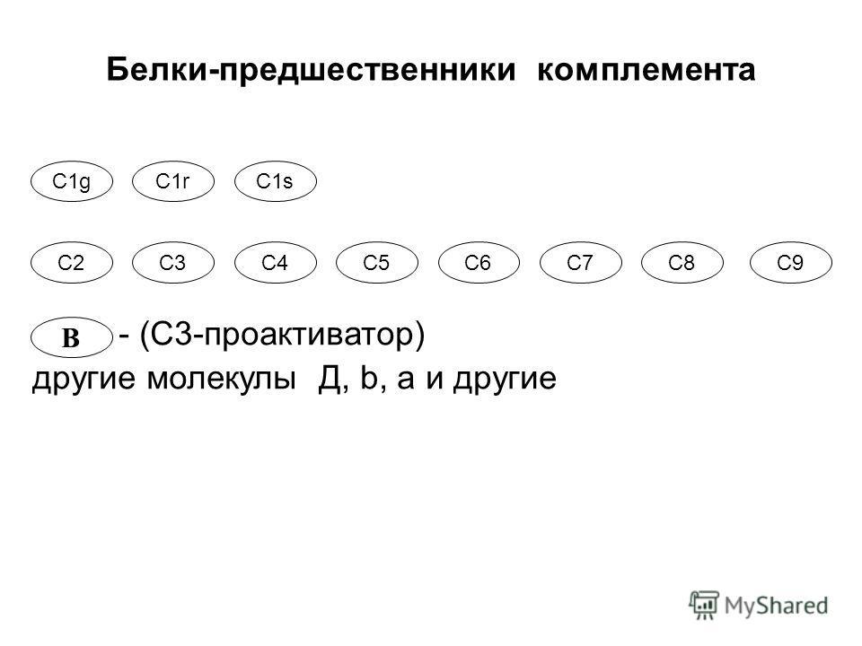 С1gС1rС1s С2С2С7С7С3С3С4С4С5С5С6С6С8С9С9 B Белки-предшественники комплемента - (С3-проактиватор) другие молекулы Д, b, а и другие