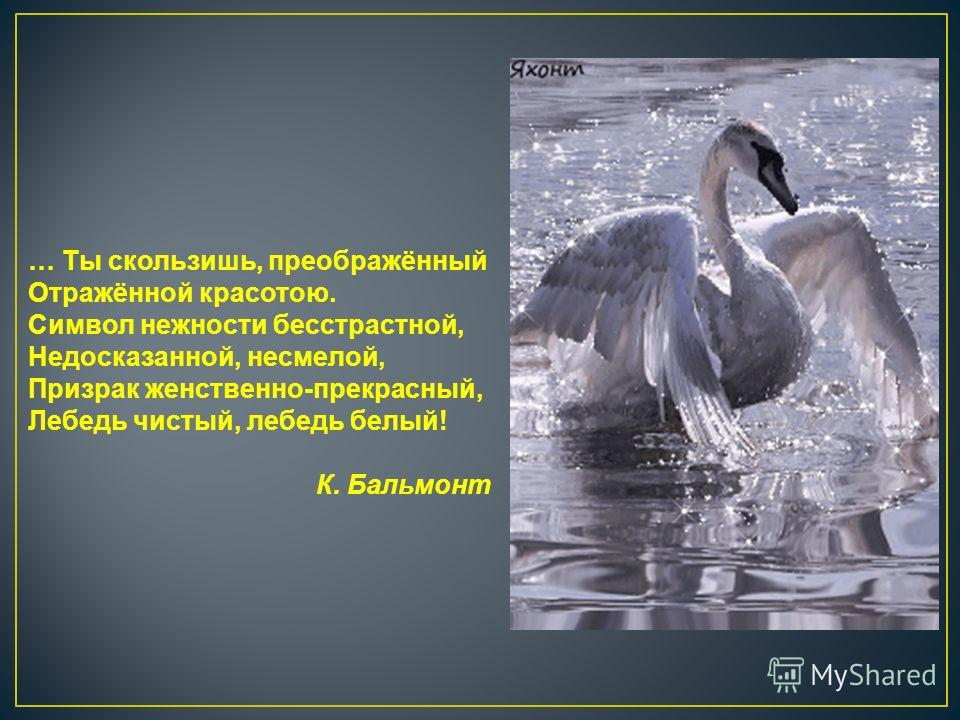 … Ты скользишь, преображённый Отражённой красотою. Символ нежности бесстрастной, Недосказанной, несмелой, Призрак женственно-прекрасный, Лебедь чистый, лебедь белый! К. Бальмонт