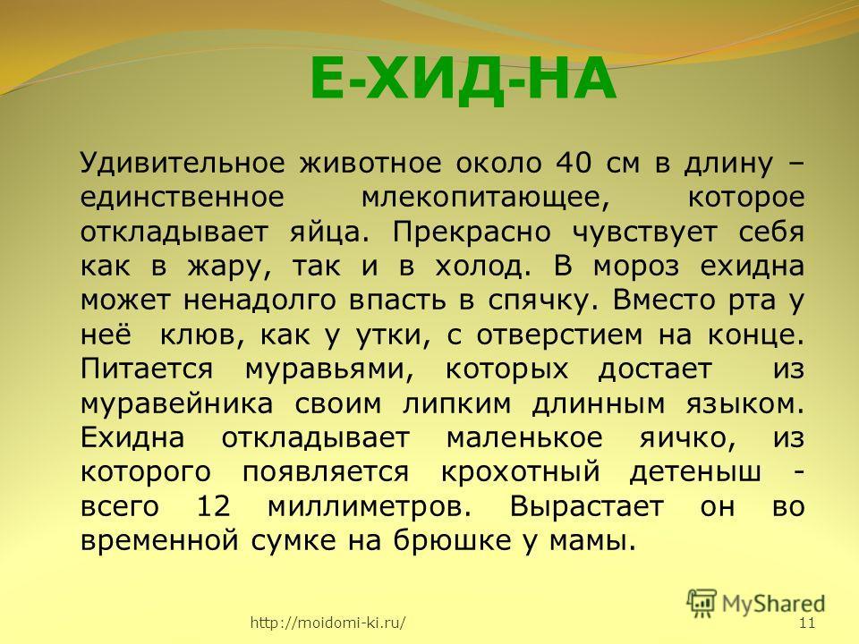 http://moidomi-ki.ru/ 11 Е - ХИД - НА Удивительное животное около 40 см в длину – единственное млекопитающее, которое откладывает яйца. Прекрасно чувствует себя как в жару, так и в холод. В мороз ехидна может ненадолго впасть в спячку. Вместо рта у н