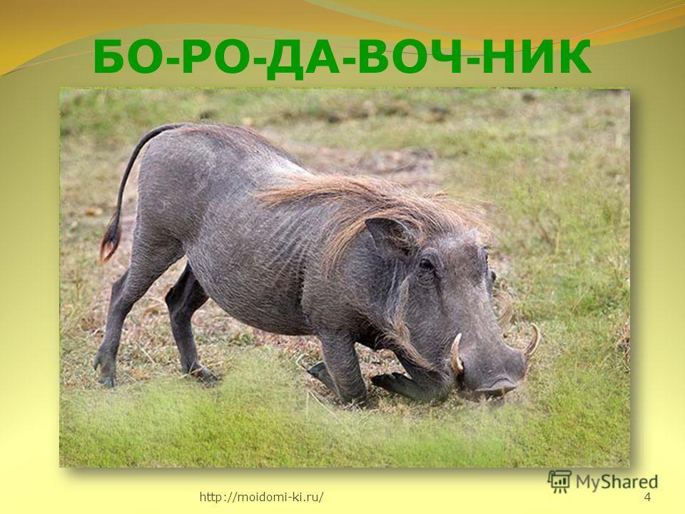 http://moidomi-ki.ru/ 4 БО - РО - ДА - ВОЧ - НИК