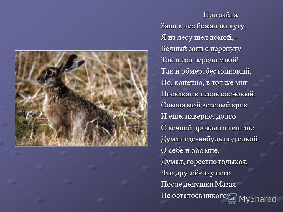 Про зайца Заяц в лес бежал по лугу, Я из лесу шел домой, - Бедный заяц с перепугу Так и сел передо мной! Так и обмер, бестолковый, Но, конечно, в тот же миг Поскакал в лесок сосновый, Слыша мой веселый крик. И еще, наверно, долго С вечной дрожью в ти