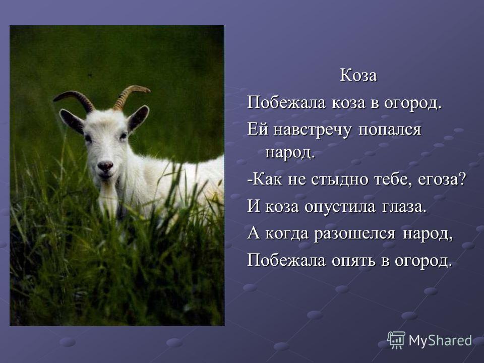 Коза Побежала коза в огород. Ей навстречу попался народ. -Как не стыдно тебе, егоза? И коза опустила глаза. А когда разошелся народ, Побежала опять в огород.
