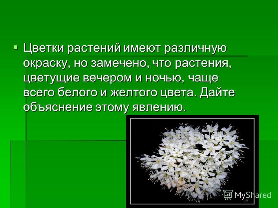 Цветки растений имеют различную окраску, но замечено, что растения, цветущие вечером и ночью, чаще всего белого и желтого цвета. Дайте объяснение этому явлению. Цветки растений имеют различную окраску, но замечено, что растения, цветущие вечером и но