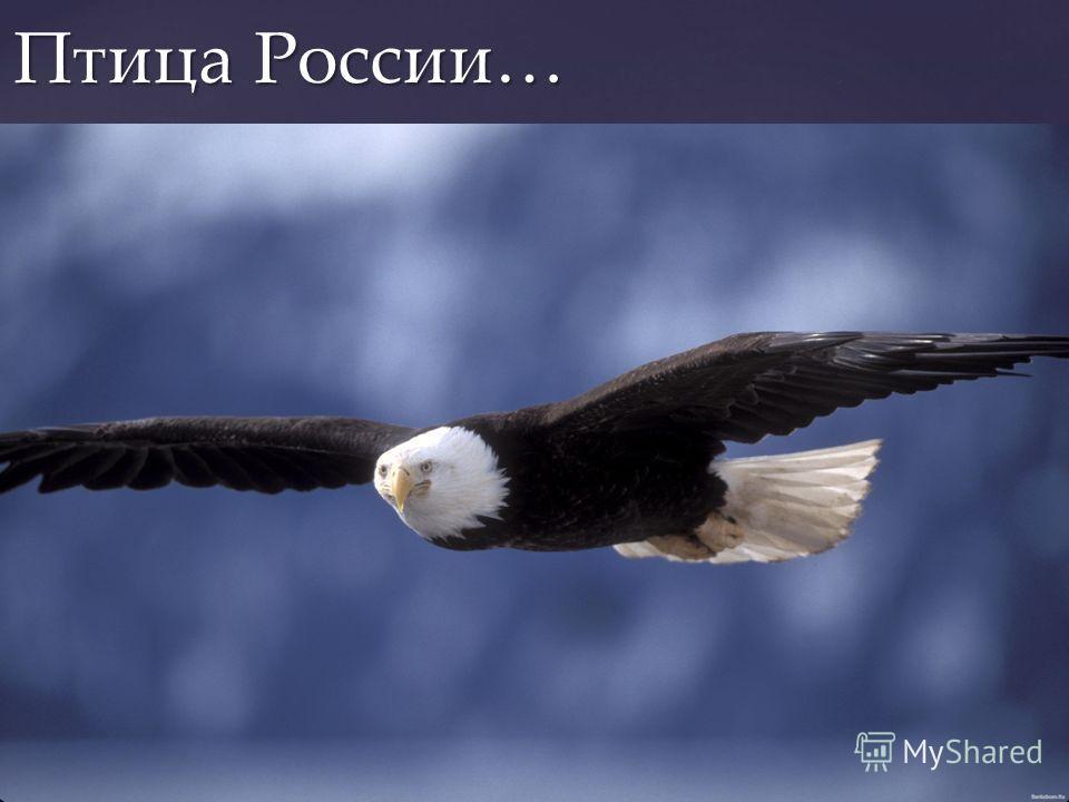 По нашему мнению, цвет России-это синий. Этот цвет олицетворяет свободу и равноправие. Привносит в нашу жизнь покой и уравновешенность. По нашему мнению, цвет России-это синий. Этот цвет олицетворяет свободу и равноправие. Привносит в нашу жизнь поко