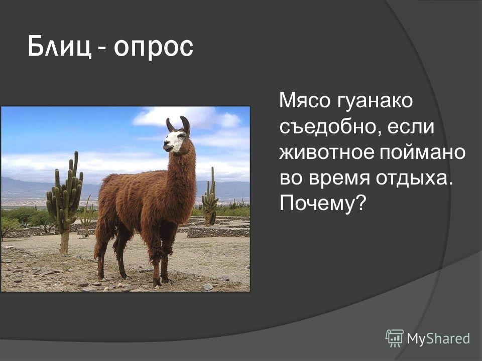 Блиц - опрос Мясо гуанако съедобно, если животное поймано во время отдыха. Почему?