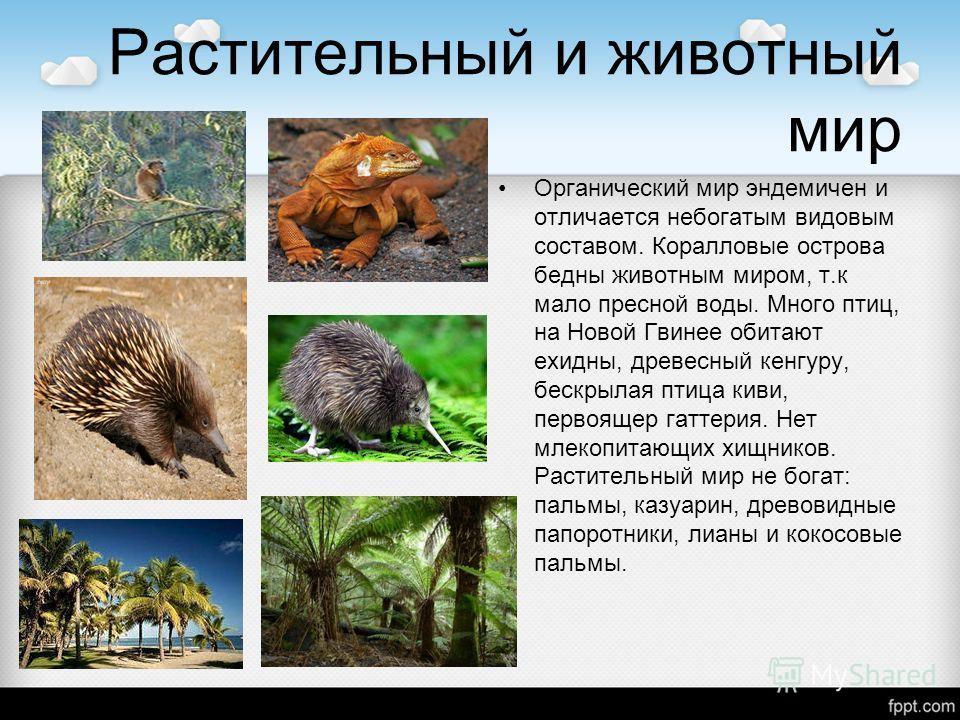 Растительный и животный мир Органический мир эндемичен и отличается небогатым видовым составом. Коралловые острова бедны животным миром, т.к мало пресной воды. Много птиц, на Новой Гвинее обитают ехидны, древесный кенгуру, бескрылая птица киви, перво