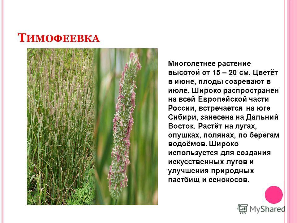 Т ИМОФЕЕВКА Многолетнее растение высотой от 15 – 20 см. Цветёт в июне, плоды созревают в июле. Широко распространен на всей Европейской части России, встречается на юге Сибири, занесена на Дальний Восток. Растёт на лугах, опушках, полянах, по берегам