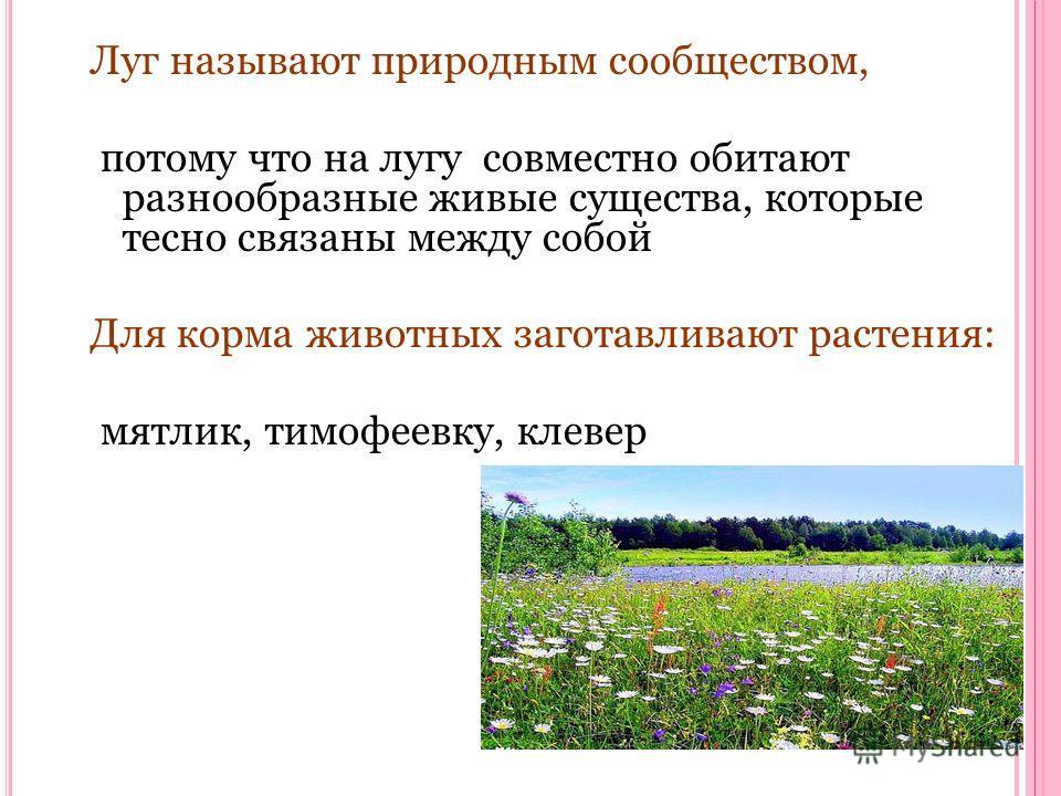 Луг называют природным сообществом, потому что на лугу совместно обитают разнообразные живые существа, которые тесно связаны между собой Для корма животных заготавливают растения: мятлик, тимофеевку, клевер