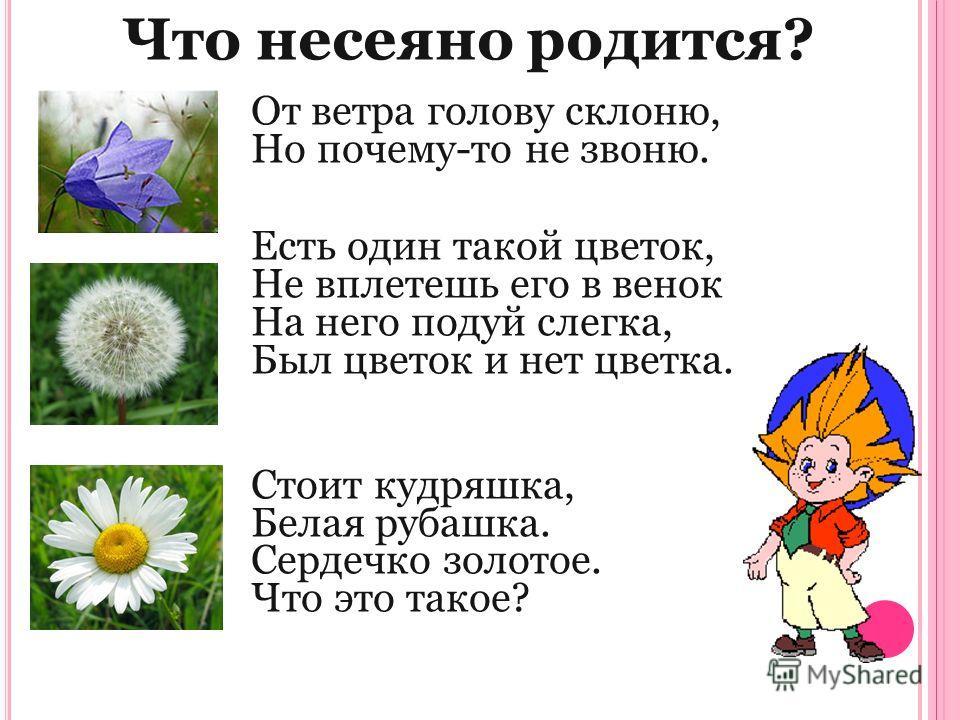Что несеяно родится? От ветра голову склоню, Но почему-то не звоню. Есть один такой цветок, Не вплетешь его в венок На него подуй слегка, Был цветок и нет цветка. Стоит кудряшка, Белая рубашка. Сердечко золотое. Что это такое?