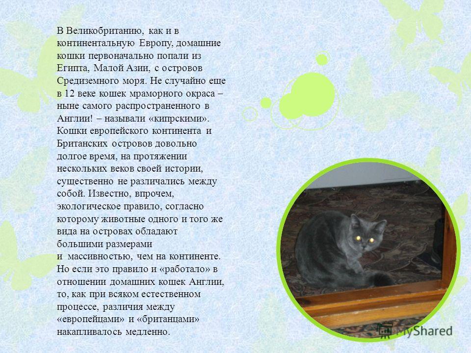 В Великобританию, как и в континентальную Европу, домашние кошки первоначально попали из Египта, Малой Азии, с островов Средиземного моря. Не случайно еще в 12 веке кошек мраморного окраса – ныне самого распространенного в Англии! – называли «кипрски