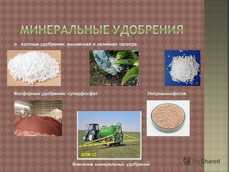 Азотные удобрения: аммиачная и калийная селитра Фосфорные удобрения: суперфосфат Нитроаммофоска Внесение минеральных удобрений