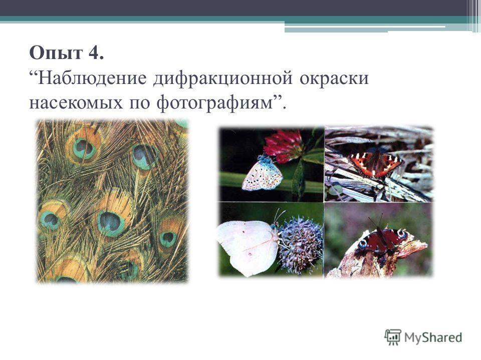 Опыт 4. Наблюдение дифракционной окраски насекомых по фотографиям.