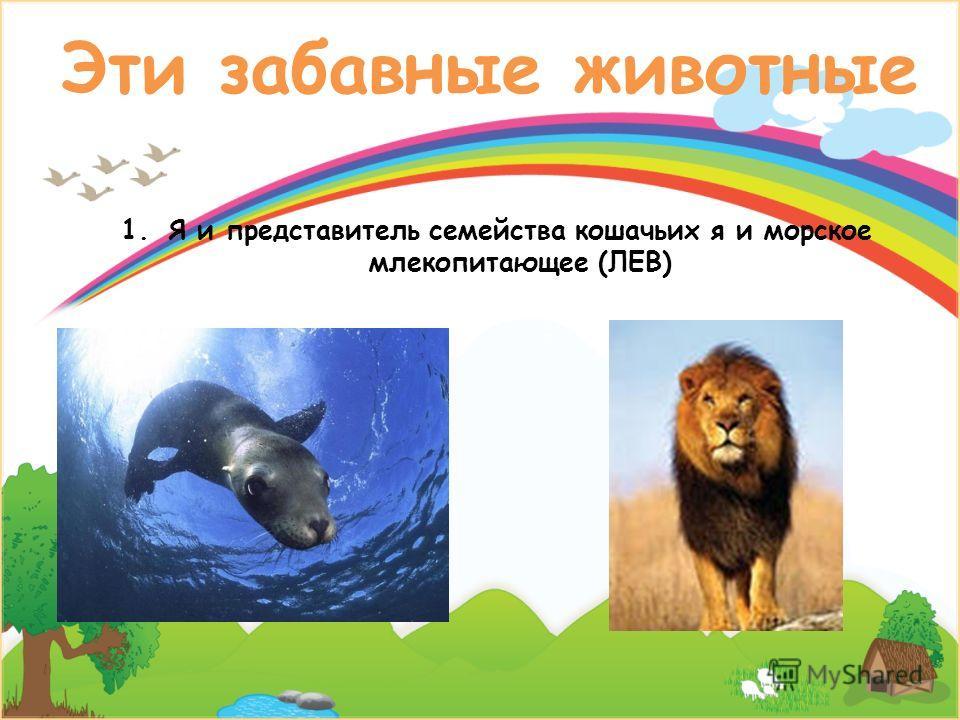 Эти забавные животные 1.Я и представитель семейства кошачьих я и морское млекопитающее (ЛЕВ)