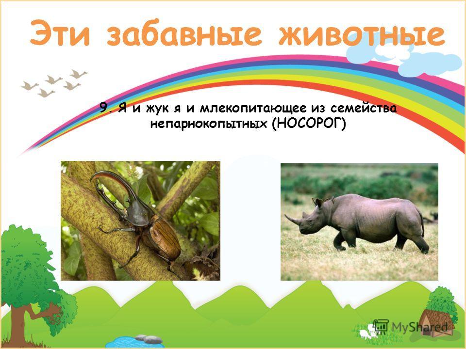 Эти забавные животные 9. Я и жук я и млекопитающее из семейства непарнокопытных (НОСОРОГ)