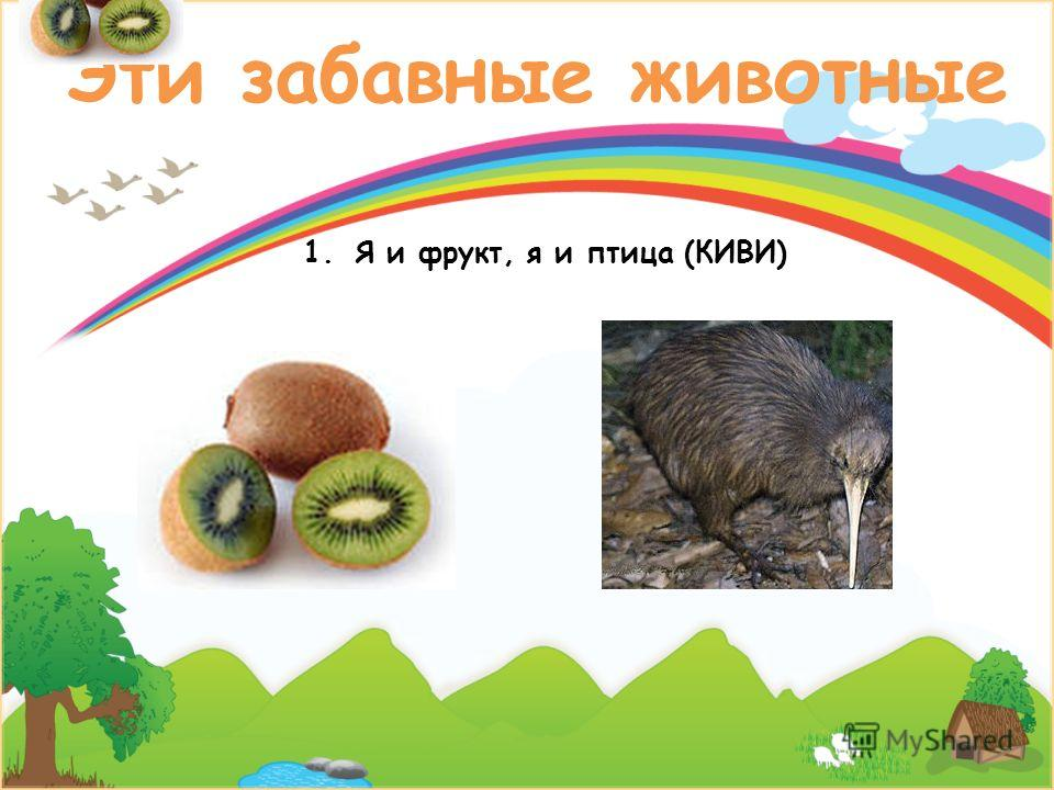 Эти забавные животные 1.Я и фрукт, я и птица (КИВИ)