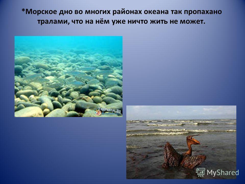 *Морское дно во многих районах океана так пропахано тралами, что на нём уже ничто жить не может.