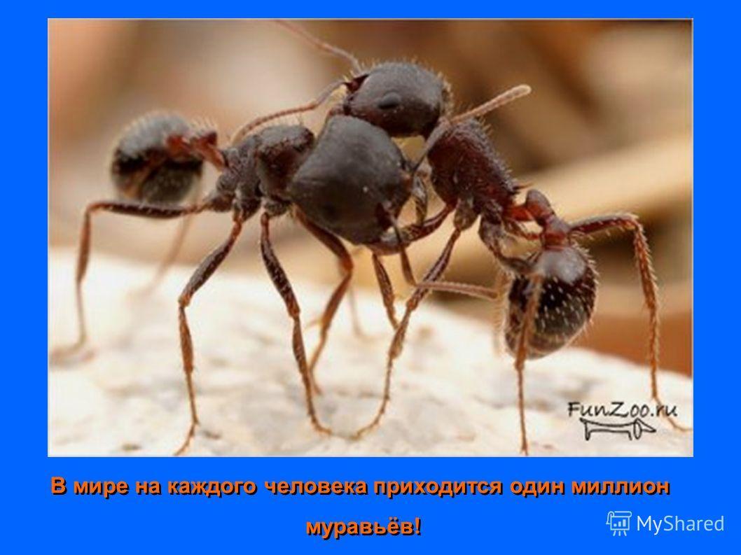 В мире на каждого человека приходится один миллион муравьёв! В мире на каждого человека приходится один миллион муравьёв!