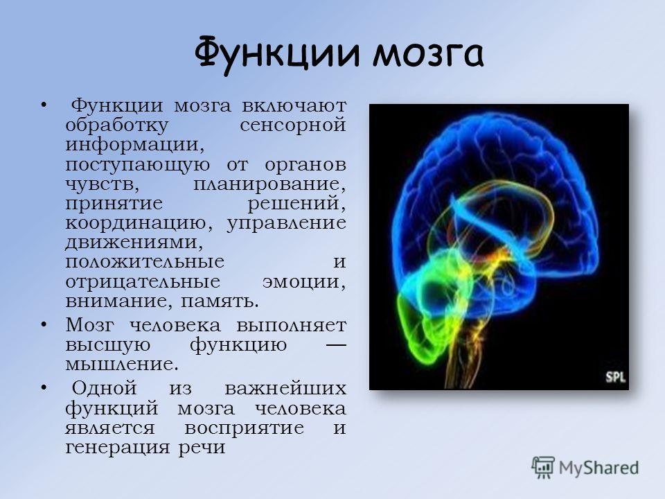 Функции мозга Функции мозга включают обработку сенсорной информации, поступающую от органов чувств, планирование, принятие решений, координацию, управление движениями, положительные и отрицательные эмоции, внимание, память. Мозг человека выполняет вы