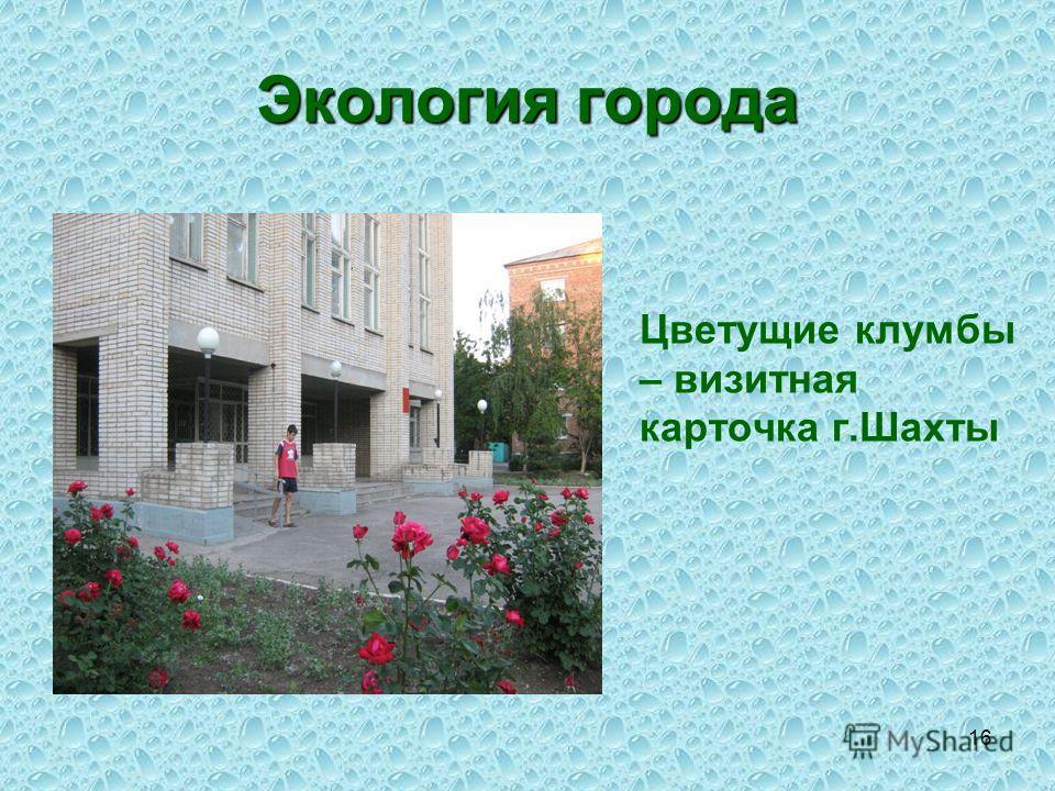 16 Экология города Цветущие клумбы – визитная карточка г.Шахты