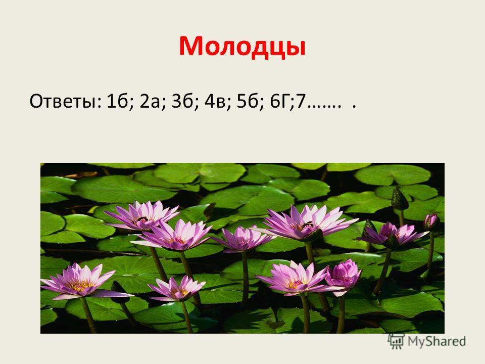 Молодцы Ответы: 1б; 2а; 3б; 4в; 5б; 6Г;7……..