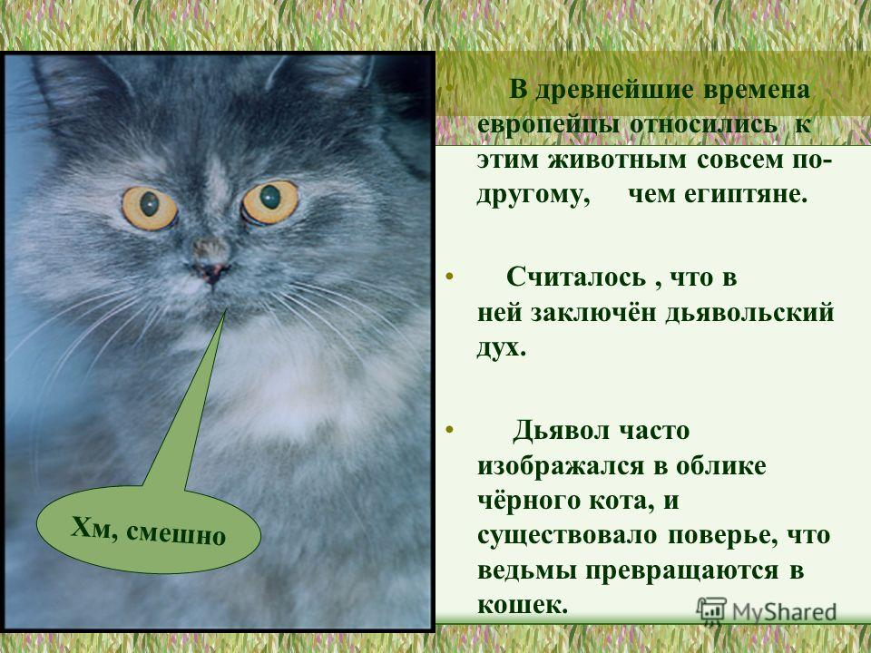 В древнейшие времена европейцы относились к этим животным совсем по- другому, чем египтяне. Считалось, что в ней заключён дьявольский дух. Дьявол часто изображался в облике чёрного кота, и существовало поверье, что ведьмы превращаются в кошек. Хм, см