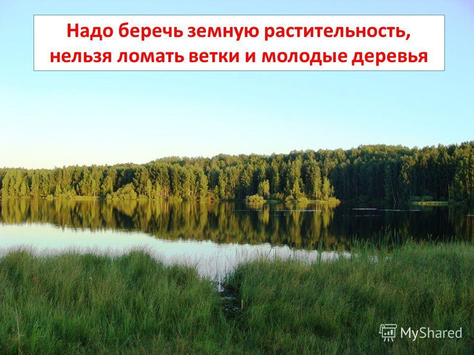 Надо беречь земную растительность, нельзя ломать ветки и молодые деревья