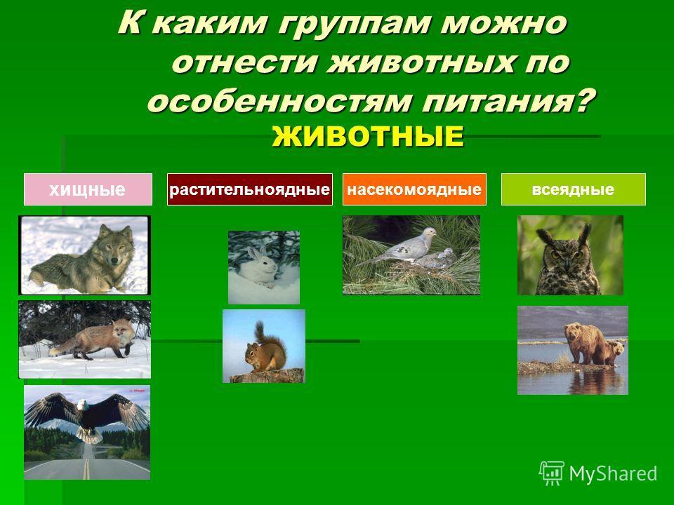 К каким группам можно отнести животных по особенностям питания? ЖИВОТНЫЕ хищные растительноядныенасекомоядныевсеядные