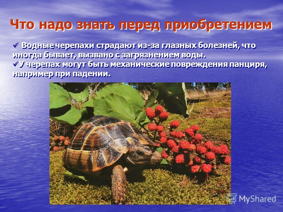 Что надо знать перед приобретением Водные черепахи страдают из-за глазных болезней, что иногда бывает, вызвано с загрязнением воды. У черепах могут быть механические повреждения панциря, например при падении. Водные черепахи страдают из-за глазных бо