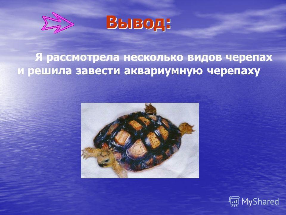 Я рассмотрела несколько видов черепах и решила завести аквариумную черепаху Вывод:
