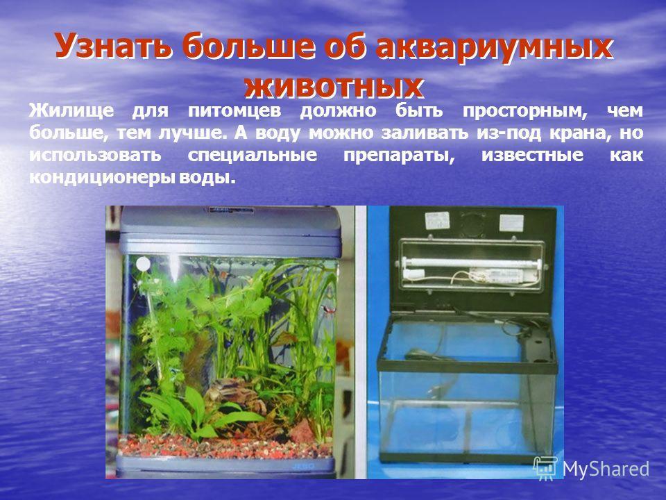 Узнать больше об аквариумных животных Жилище для питомцев должно быть просторным, чем больше, тем лучше. А воду можно заливать из-под крана, но использовать специальные препараты, известные как кондиционеры воды.