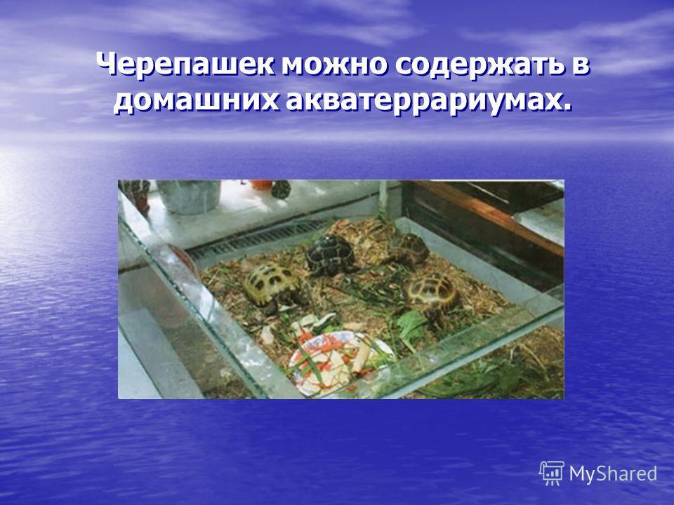 Черепашек можно содержать в домашних акватеррариумах.