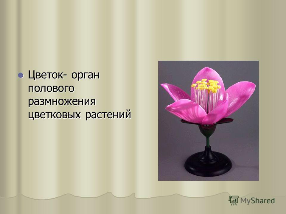 Цветок- орган полового размножения цветковыx растений Цветок- орган полового размножения цветковыx растений