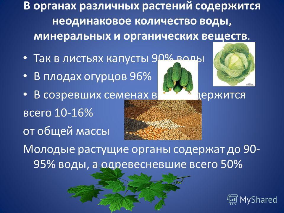 В органах различных растений содержится неодинаковое количество воды, минеральных и органических веществ. Так в листьях капусты 90% воды В плодах огурцов 96% В созревших семенах воды содержится всего 10-16% от общей массы Молодые растущие органы соде