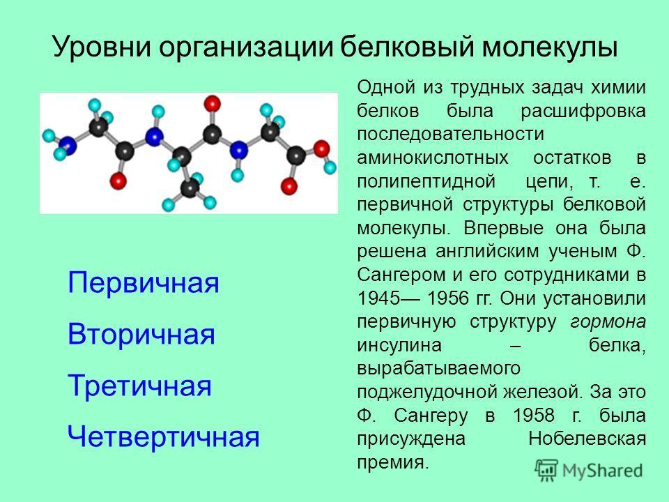 Уровни организации белковый молекулы Первичная Вторичная Третичная Четвертичная Одной из трудных задач химии белков была расшифровка последовательности аминокислотных остатков в полипептидной цепи, т. е. первичной структуры белковой молекулы. Впервые