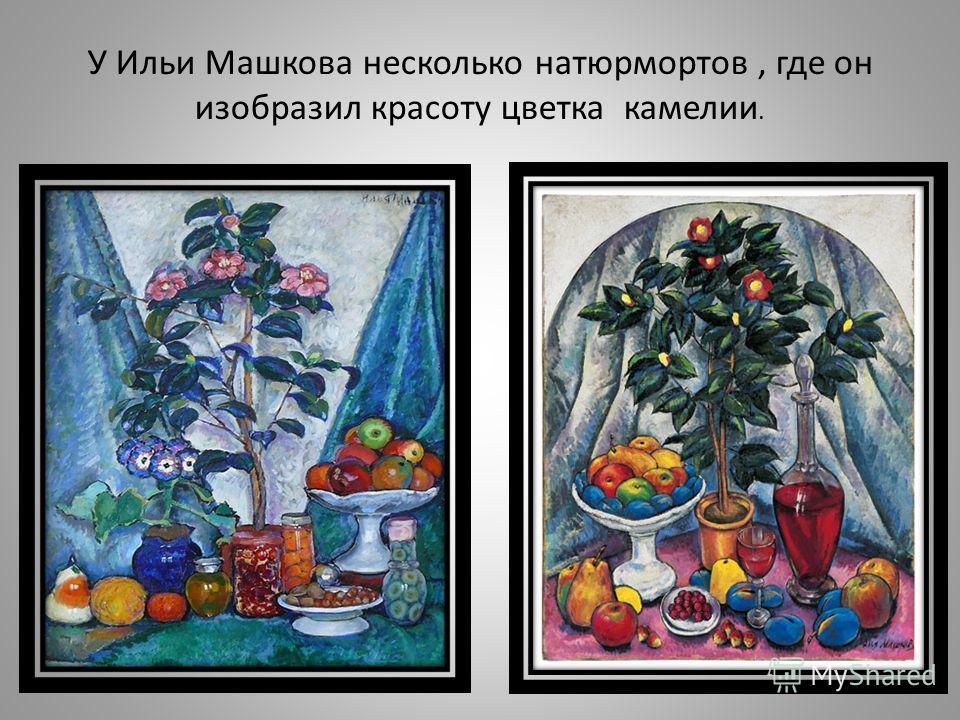 У Ильи Машкова несколько натюрмортов, где он изобразил красоту цветка камелии.