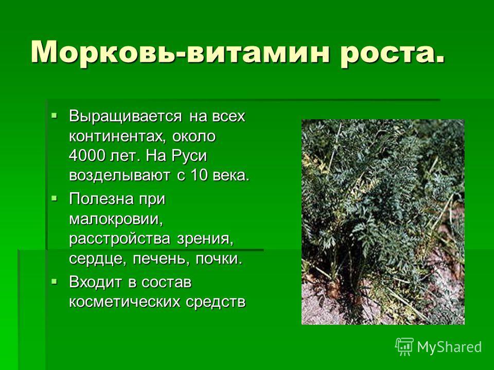 Морковь-витамин роста. Выращивается на всех континентах, около 4000 лет. На Руси возделывают с 10 века. Выращивается на всех континентах, около 4000 лет. На Руси возделывают с 10 века. Полезна при малокровии, расстройства зрения, сердце, печень, почк