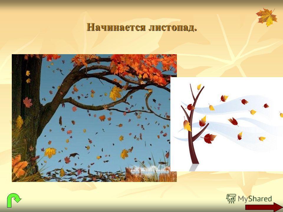 Начинается листопад.