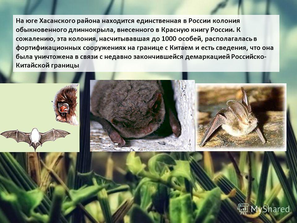 На юге Хасанского района находится единственная в России колония обыкновенного длиннокрыла, внесенного в Красную книгу России. К сожалению, эта колония, насчитывавшая до 1000 особей, располагалась в фортификационных сооружениях на границе с Китаем и